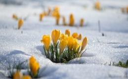Imbolc: entre el invierno y la primavera