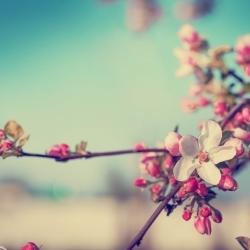 Celebrar la Primavera en mi