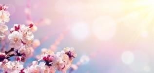 Florecer con la Primavera Encuentro Online